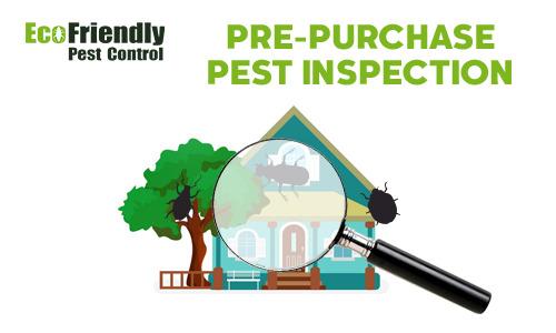 Pre-purchase Termite Inspection  Seville Grove