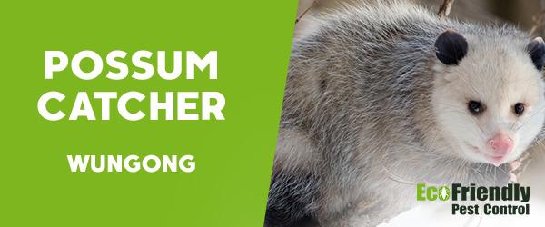 Possum Catcher Wungong