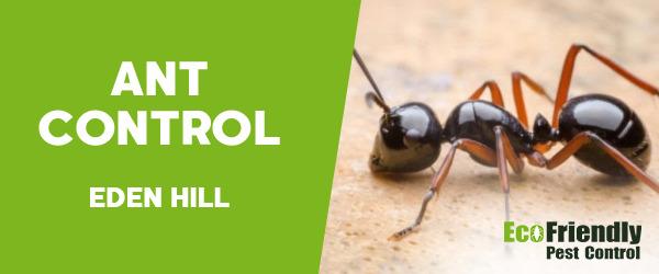 Ant Control  Eden Hill