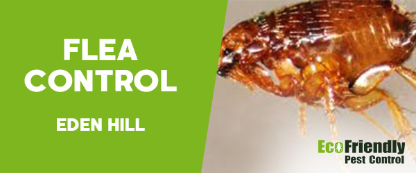 Fleas Control  Eden Hill