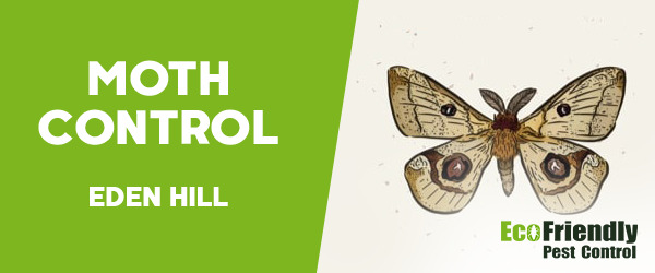 Moth Control  Eden Hill