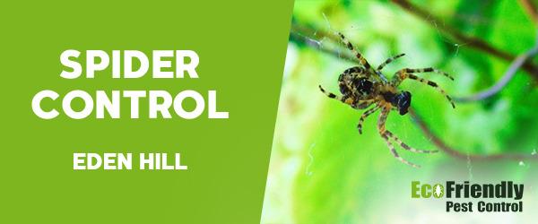 Spider Control  Eden Hill