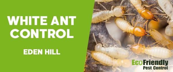 White Ant Control  Eden Hill