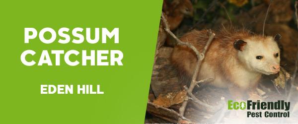 Possum Catcher  Eden Hill