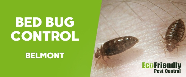Bed Bug Control  Belmont