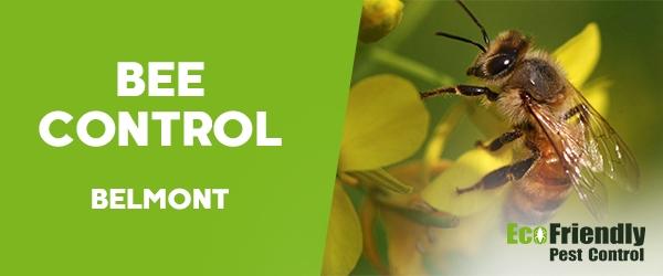 Bee Control  Belmont