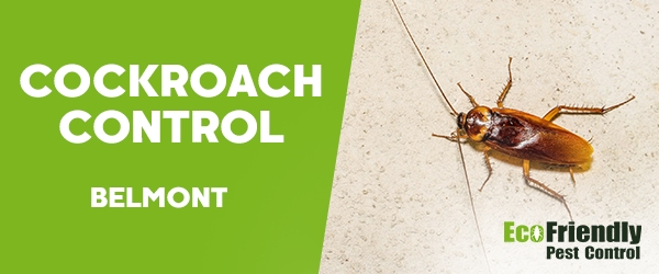 Cockroach Control  Belmont