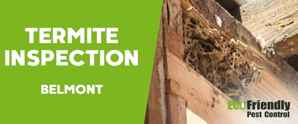 Termite Inspection  Belmont