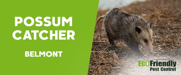 Possum Catcher  Belmont