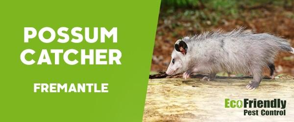 Possum Catcher  Fremantle