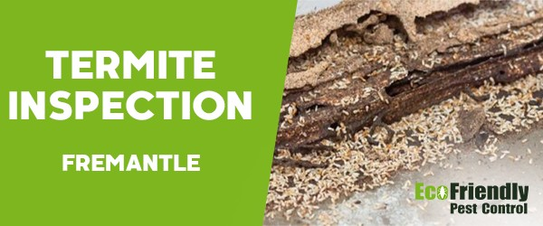 Termite Inspection  Fremantle