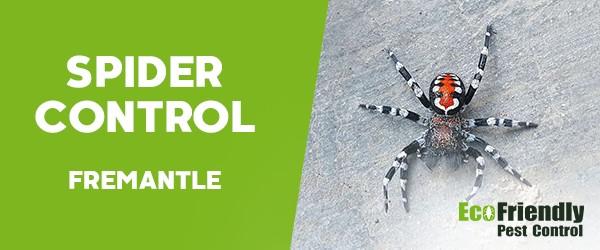 Spider Control  Fremantle