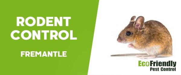 Rodent Treatment  Fremantle