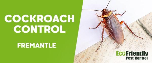 Cockroach Control  Fremantle