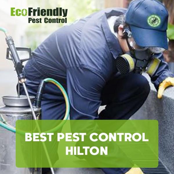 Best Pest Control Hilton