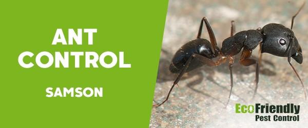 Ant Control Samson