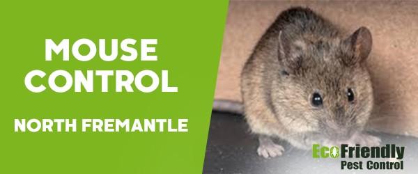 Mouse Control  South Fremantle