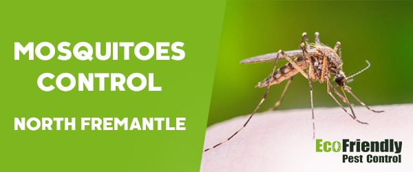Mosquitoes Control  South Fremantle