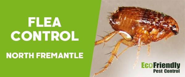 Fleas Control  South Fremantle