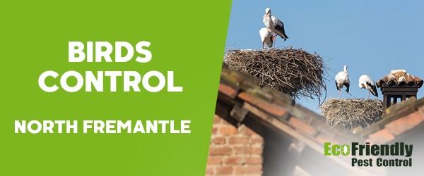Birds Control  South Fremantle