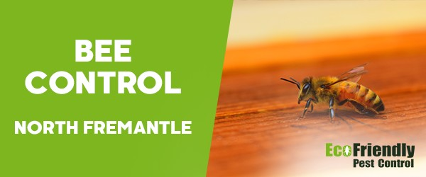 Bee Control  South Fremantle