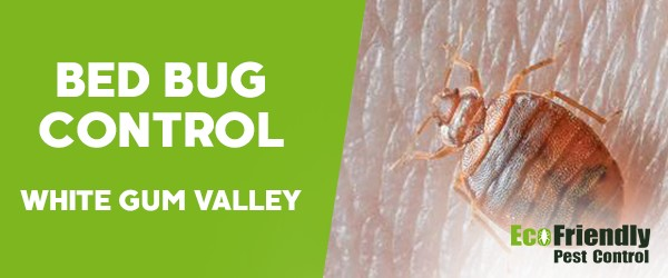 Bed Bug Control White Gum Valley