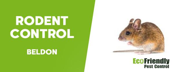 Rodent Treatment  Beldon