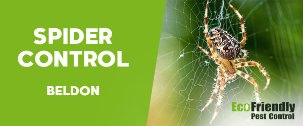 Spider Control  Beldon