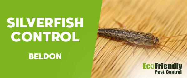 Silverfish Control  Beldon