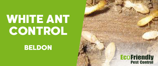 White Ant Control  Beldon