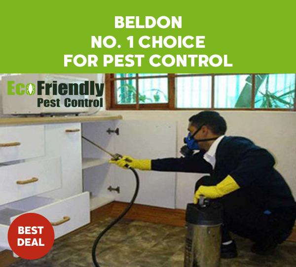 Pest Control Beldon