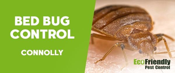 Bed Bug Control  Connolly
