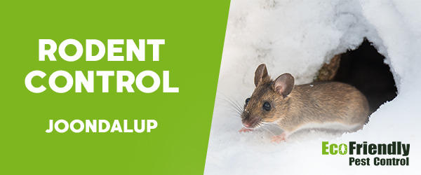 Rodent Treatment  Joondalup