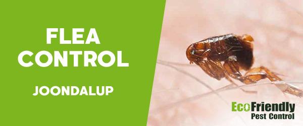 Fleas Control  Joondalup