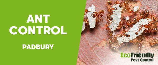 Ant Control  Padbury