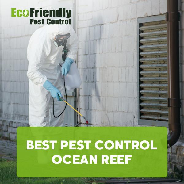 Best Pest Control Ocean Reef