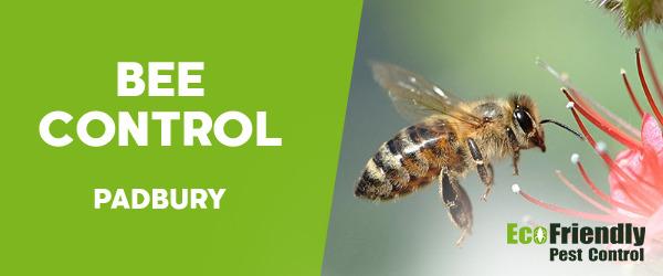 Bee Control  Padbury
