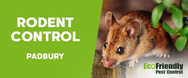 Rodent Treatment  Padbury