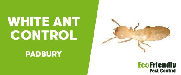 White Ant Control  Padbury