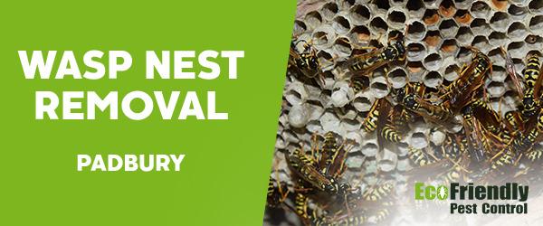 Wasp Nest Remvoal  Padbury