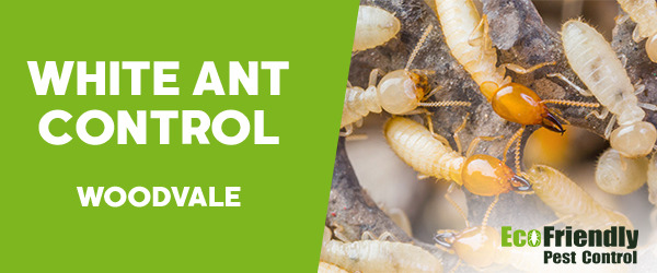 White Ant Control  Woodvale