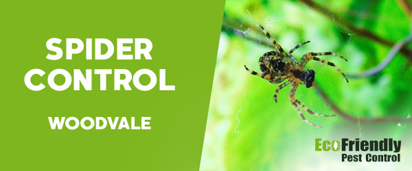 Spider Control  Woodvale