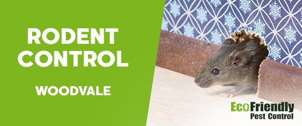 Rodent Treatment  Woodvale