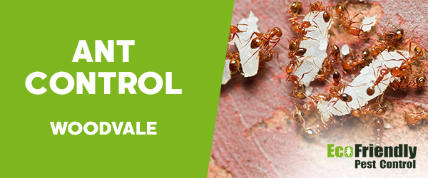 Ant Control  Woodvale