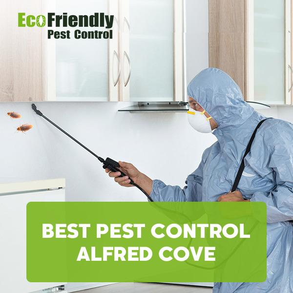 Best Pest Control Alfred Cove