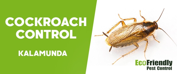 Cockroach Control  Kalamunda