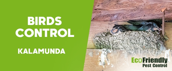 Birds Control  Kalamunda