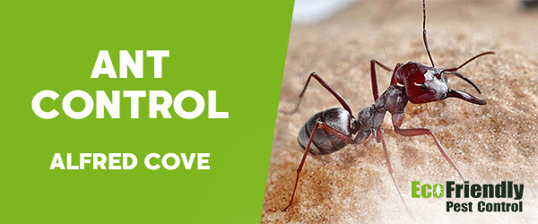 Ant Control Alfred Cove