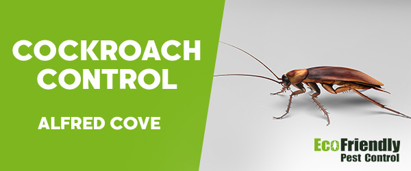 Cockroach Control Alfred Cove
