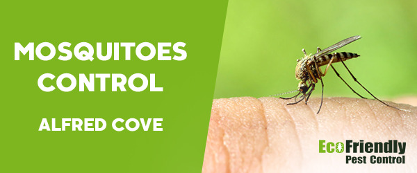 Mosquitoes Control Alfred Cove